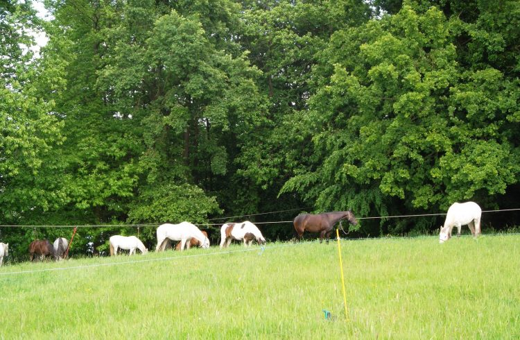 Camping–Beausejour-3-chevaux-resize